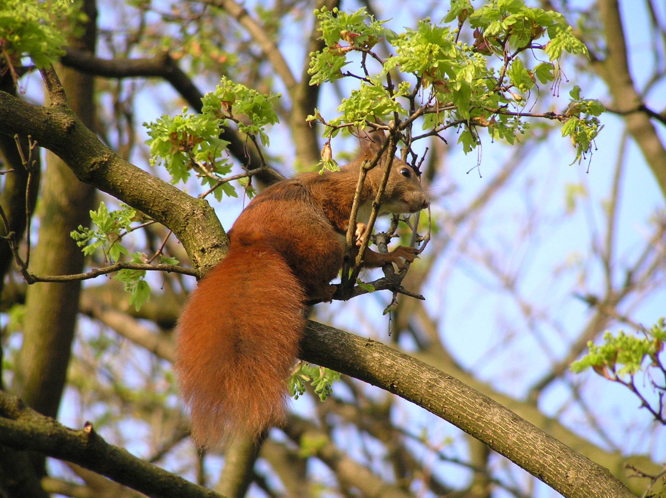 photos von einem eichhörnchen im baum